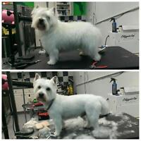 Dog Grooming for small dogs