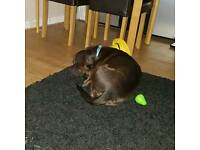 Dog cross breed