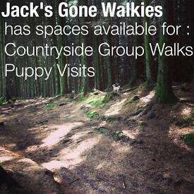 Jack's Gone Walkies. Dog walker/dog walking. Bearsden, Milngavie, Faifley, Drumchapel and Clydebank