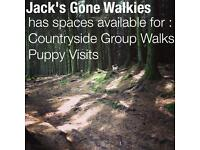 Jack's Gone Walkies. Dog walker/dog walking. Bearsden, Milngavie, Faifley, Drumchapel and Clydebank