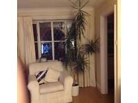 7ft Indoor Plant