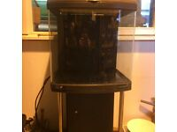 Marine or tropical fish tank.