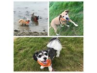 Professional Dog Walker -Fully Insured & DBS Checked
