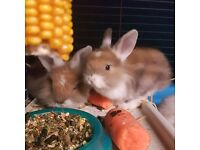 2 Beautiful Baby Rabbits