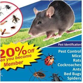 Pest Control Mice Rat bedbugs Ants exterminators 100% same day