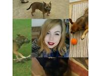 Sally's Holiday Dog Sitting/sitter - Prices Vary (mentioned in description) CRB checked