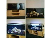 4foot fish tank set up with fish