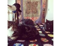 2 x affectionate, well trained & loving cats need a new home