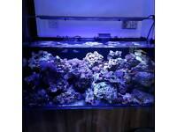 Live rocks for marine aquarium
