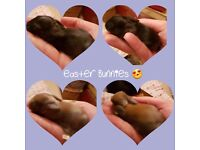 4 beautiful lop eared baby rabbits
