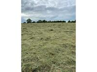 Round bale and Small Square Bale Haylage & Small square bales of Hay