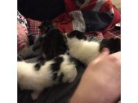 Gorgeous kittens ready for loving homes.