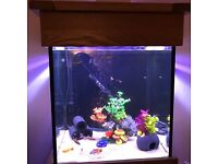 180 litre Fish tank