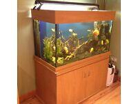 Aquarium/ Fish Tank