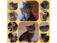 3 boys and 2 girl kittens