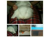 rabbit indoor cage and hutch