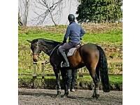 Rider groom horses.