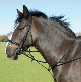 Horse martingales
