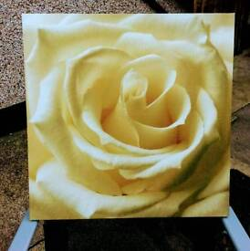New Yellow and White Canvas Picture