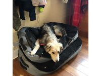 Good homes wanted for 2 rescue dogs from Romania
