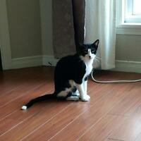 Free: 1 year old little sweetie