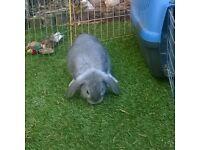 Baby boy Rabbits.