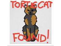 FOUND - Slim Tortoiseshell Shorthaired Cat