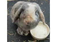 1yr old rabbit Rufus