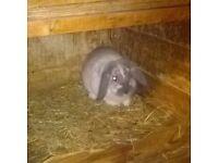 Female baby Rabbit.