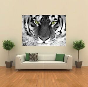 WHITE TIGER ARTY EYE GIANT ANIMAL POSTER PRINT X1432
