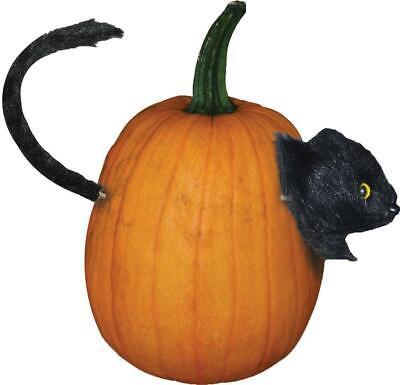 Spirit Halloween Cat (BLACK CAT PUMPKIN PUSH-IN HAUNTED Outdoor Halloween Decor Prop YARD)