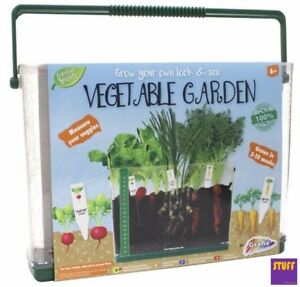 Children's Grow Your Own See-Through Vegetable Garden Kids' Grow Box Craft Kit