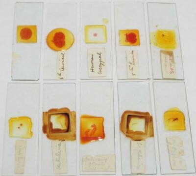 Vintage Microscope Slides Group of 10 Slides (f)
