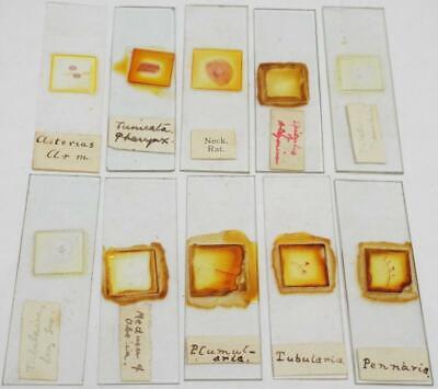 Vintage Microscope Slides Group of 10 Slides (d)