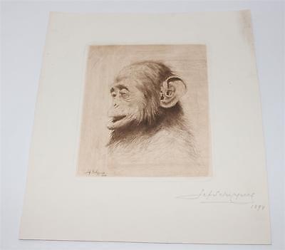 signierte Radierung, Zeichnung, Jef Schippers 1894,  Affe Schimpanse #G695