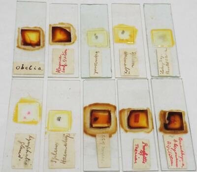 Vintage Microscope Slides Group of 10 Slides (h)