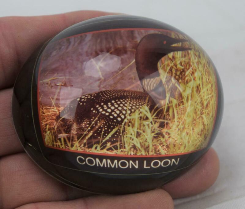 Acrylium Photo Gems Common Loon Paperweight Made In Canada