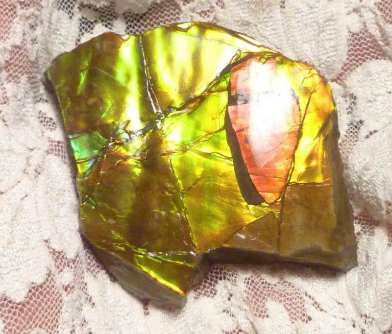 Shiney Red Green AMMOLITE Gemstone Rough 53x53mm