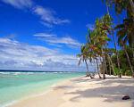 Paradise Deals & More