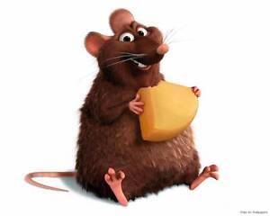 Ethical Rat/Rodent Breeding Business for sale Frankston Frankston Area Preview