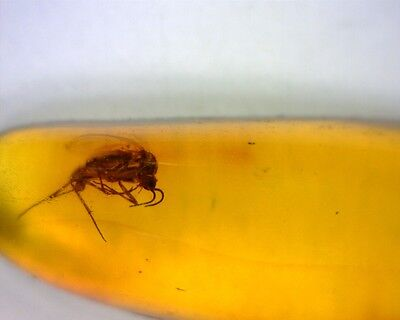 Baltic Amber With Fossil Fly Insect Inside Special Offer #109