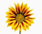 Soleil-Fleur-Boutique
