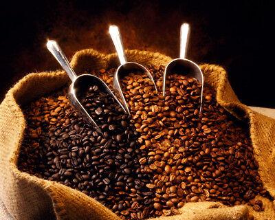 2 lbs. RhoadsRoast Coffees Jamaican Blue Mountain Style Fresh Coffee Beans