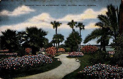 Tropical Trail in Waterfront Park, Daytona Beach, Florida Vintage Postcard F22