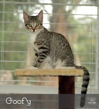 Goofy. Available for adoption. Can you give me my forever home? Campbelltown Campbelltown Area Preview