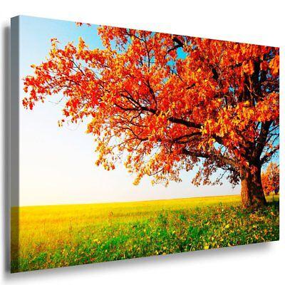Schöne Baum & Feld Leinwandbild AK Art Bilder Mehrfarbig Wandbild Kunstdruck XXL