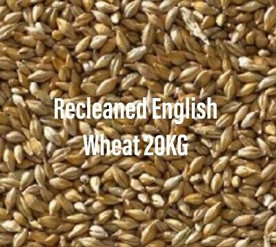 Pigeon Food Seed 20KG Recleaned English Wheat Bird Feed by Top Flight BMFD DS