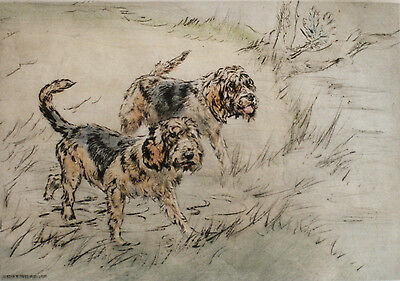 OTTERHOUND OTTER HOUND DOG LIMITED EDITION PRINT - ENGRAVING - Henry Wilkinson