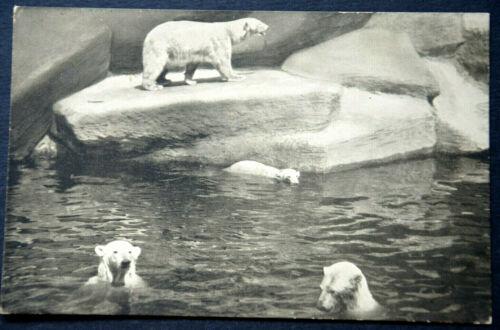 48300 Ak Polar Bears At Baden IN Zoo Nuremberg