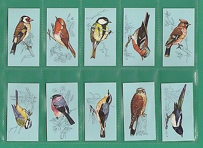 BIRDS  -  TETLEY  TEA  -  RARE  SET OF  48  BRITISH  BIRDS  CARDS  -  1970